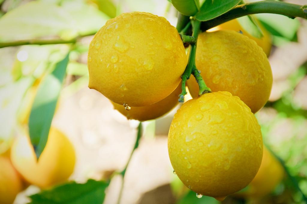 lemons for cleaning